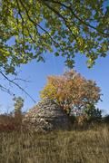 Istrian dome kazun under the tree - stock photo