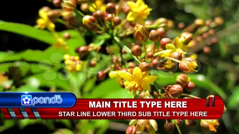 After Effects Project - Pond5 Star Line Lower Third.zip 12542596