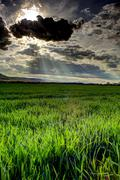 Green fields HDR Stock Photos