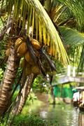 Stock Photo of palm tree tropical forest in backwater of kochin, kerala, india