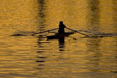 Rowing in the golden waters Stock Photos