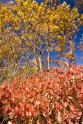 Colours of autumn - stock photo