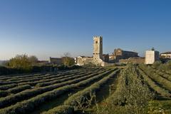 Lavender fields in front of Sv.Lovrec - stock photo