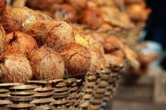 tasty organic coconuts at local market in india - stock photo