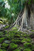 ruin of abandoned building covered with roots on ross island. andaman islands - stock photo