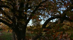 Crane shot from tree to vineyard Stock Footage
