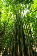 Stock Photo of bamboo green forest with morning sunlight.