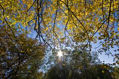 Sun through the leaves - stock photo