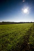 Green grass and the sun - stock photo