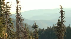 P02337 Forest in Washington State Stock Footage