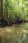 Mangrove tree in havelock island in andamans, india. Stock Photos