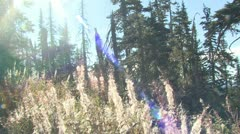 P02341 Seed Dispersal Due to Wind at Olympic National Park Stock Footage