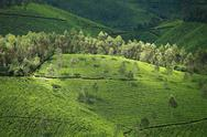 Stock Photo of landscape of green tea plantations. munnar, kerala, india