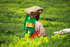 Stock Photo of landscape of green tea plantations. munnar, kerala, india