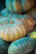 Stock Photo of green pumpkin.