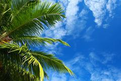 green palm tree over blue sky in andamans island, india. - stock photo