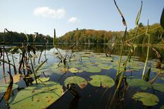 Lily pads in Muskoka Ontario Canada - stock photo