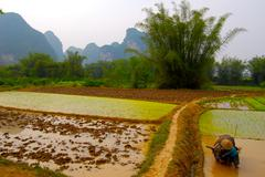Rice plantation in China Stock Photos