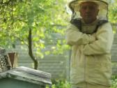 Stock Video Footage of Beekeeper at work with fumigation apparatus NTSC