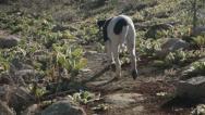 Dog walking on mountain trail HD9042 Stock Footage