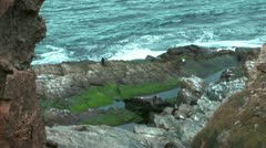 Seal and seagulls on rocky shore Stock Footage