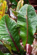 Croton Stock Photos