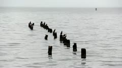 Birds Rest on Pilings Stock Footage