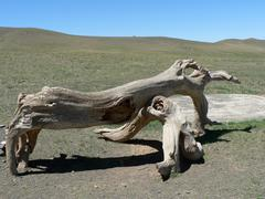 scenic trunk in gobi desert - stock photo