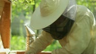 Stock Video Footage of Beekeeper working in his apiary HD