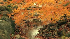 Autumn twigs with mountain river in the background. - stock footage