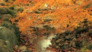 Stock Video Footage of Autumn twigs with mountain river in the background.