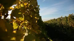 Stock Video Footage of crane shot of vineyards