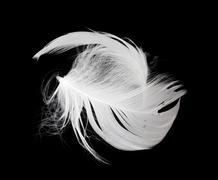 Stock Photo of white feather isolated on white background