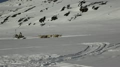 Christmas inspiration: Dog sleed in Greenland Stock Footage
