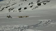Stock Video Footage of Dog sleed in Greenland