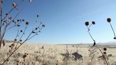 Desert Prarie Pan Stock Footage