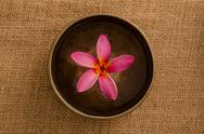 Stock Photo of frangipani spa concept photo, lowlight ambient spa lighting, shallow dof