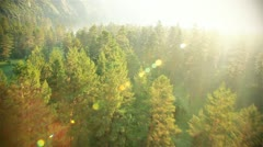 Flight over beautiful forest in sunny day Stock Footage