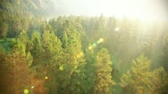 Stock Video Footage of flight over beautiful forest in sunny day