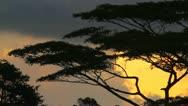 Jungle Dawn Stock Footage