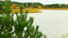 Lake. young spruce. Stock Footage