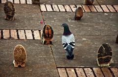 Pigeon with Shoes Stock Photos