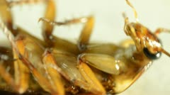 Cockroach Stock Footage