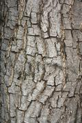 Stock Photo of bark texture.