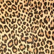 leopard leather pattern texture closeup - stock photo