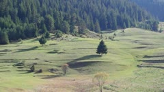 Free grazing sheep. - stock footage
