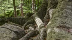 Ancient tree root Stock Footage