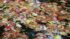 Colored leaves floating on water Stock Footage