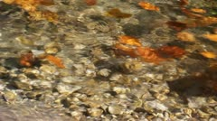 Colored autumn leaves taken away by river - stock footage