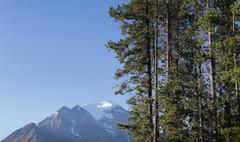 Trees Border Mountains - stock photo